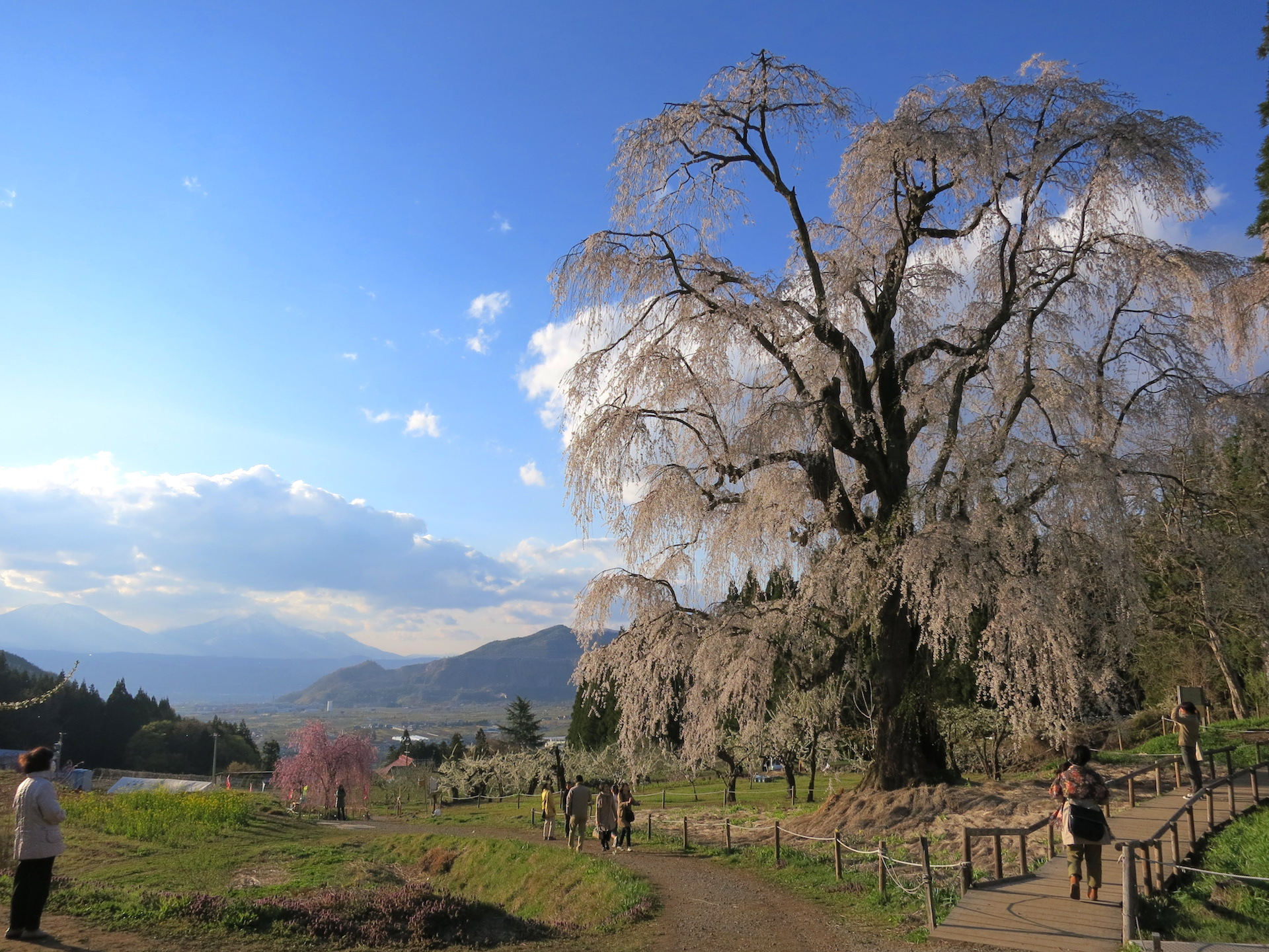 信州高山桜まつり
