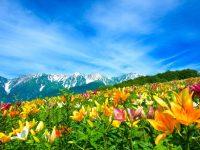 2018|白馬岩岳『ゆり園&マウンテンビュー』営業