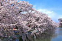 臥竜公園さくらまつり|須坂市|2019