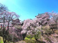 第16回上田城千本桜まつり|2019