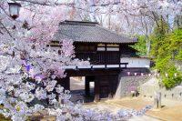 小諸城址懐古園桜まつり|2019