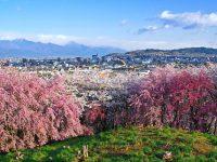 第27回弘法山古墳桜まつり|松本市|2019